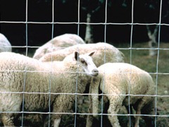 Grillage mouton ursus